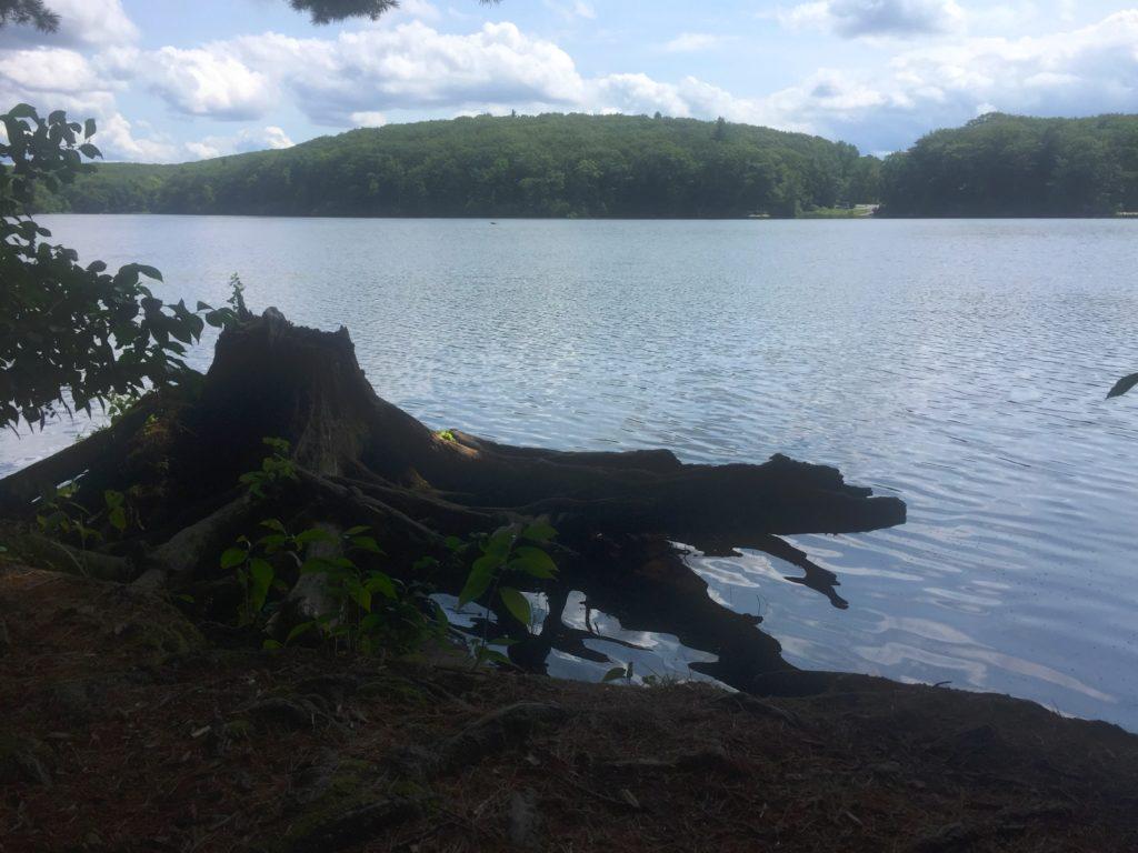 Tree Stump at Edge of Water at Benedict Pond